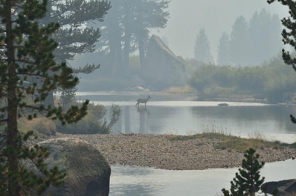 Bob @ Tuolumne Meadows 8-2013 - Yosemite