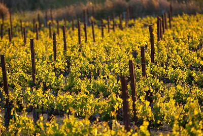Vinyards, wine country