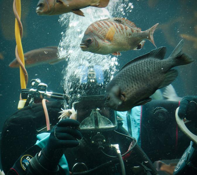 Monterey Bay Aquarium-2568.jpg
