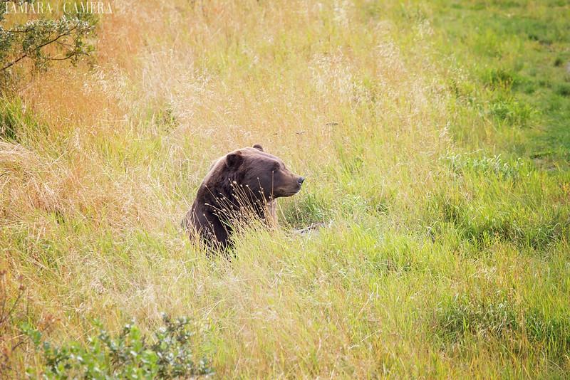 Bear-2-2.jpg