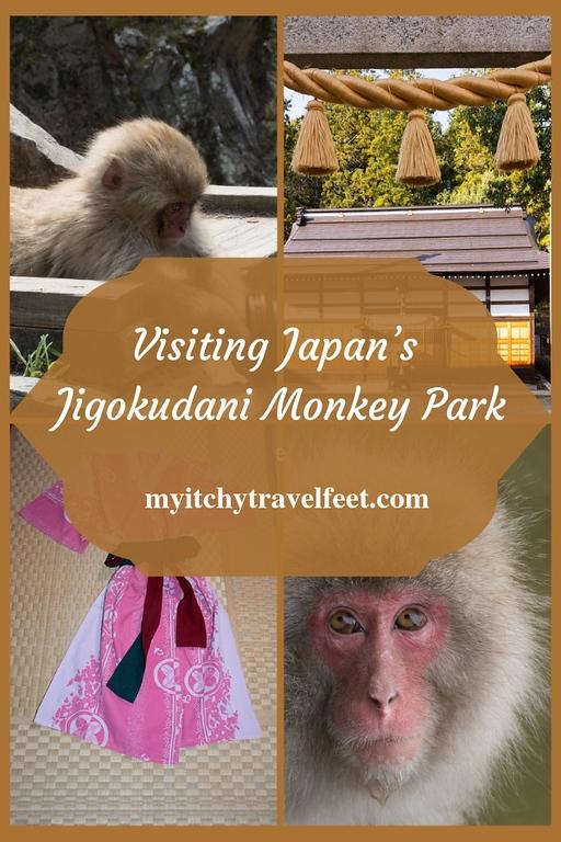 Tips for visiting Jigokudani Monkey Park in Yudanaka, Japan.