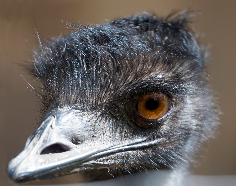 The Emu's pretty face