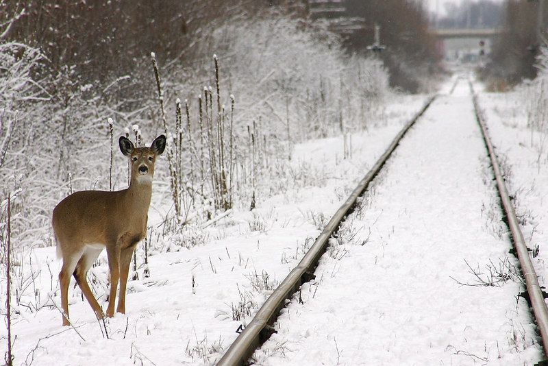 railroad-suprise.jpg