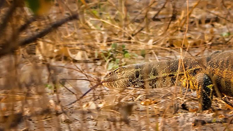 2014-08Aug-Okavango Masters-86-Edit.jpg