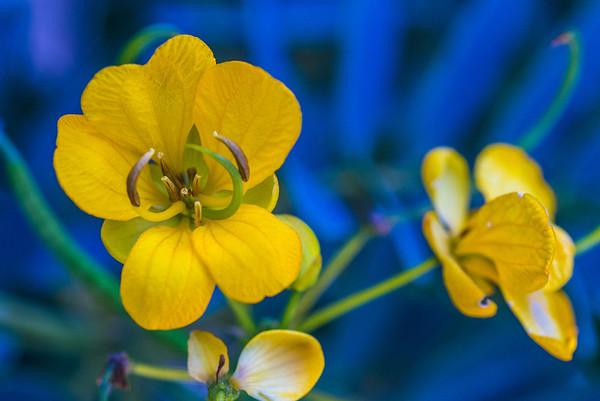South Coast Botanic Garden_06.08.14