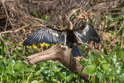 Pantanal Birds