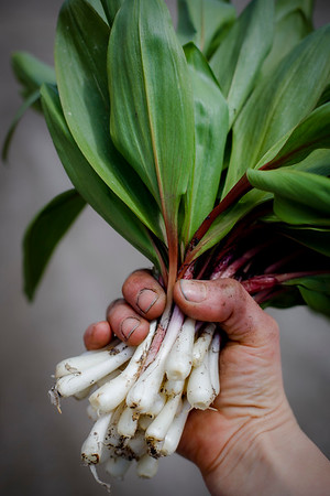 Foraging for Ramps-042820