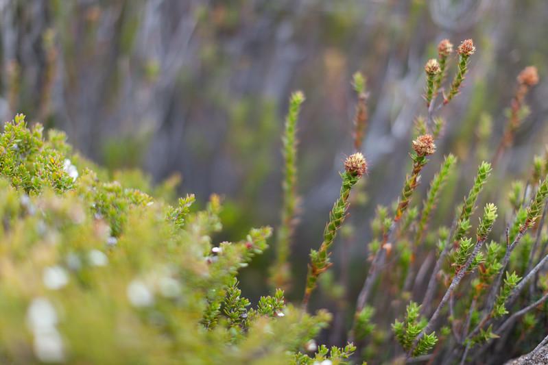 Tasmania_2015_199.jpg