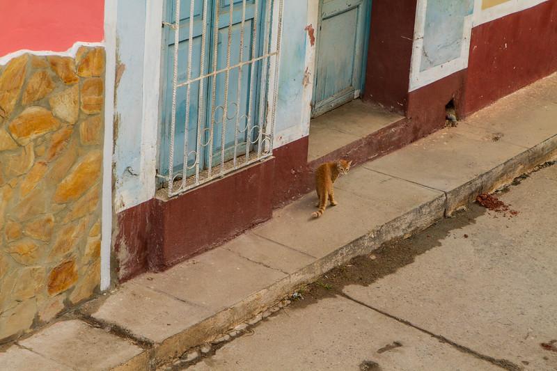 kiel-cats-08.jpg