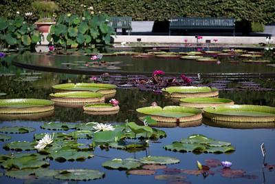 Aquatic Gardens - 2011