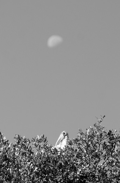SCOPe_Huntington Beach State Park OCT 2012_22 B&W.jpg