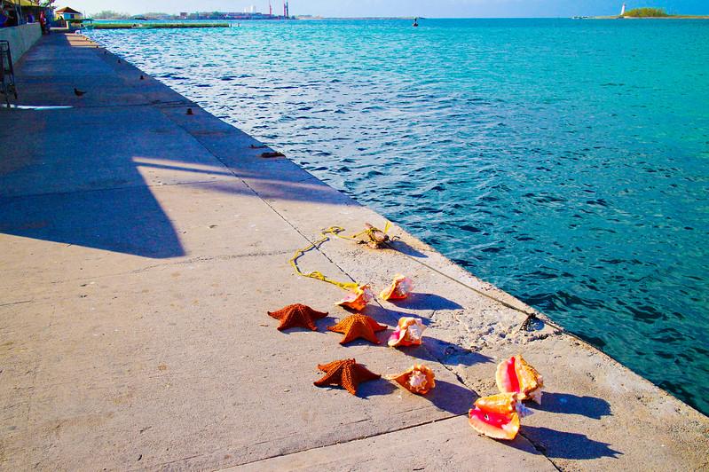 Sea Shells. Bahamas
