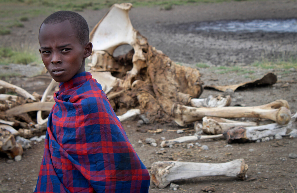 . In this Wednesday, Feb. 13, 2013 photo, a Maasai boy stands near the skeleton of an elephant killed by poachers outside of Arusha, Tanzania. Demand for ivory in the Far East, particularly China, is fueling elephant deaths in Africa. Poachers across the continent are slaying the giants and cutting out their tusks to earn wages far beyond what legal daily labor provides. (AP Photo/Jason Straziuso)