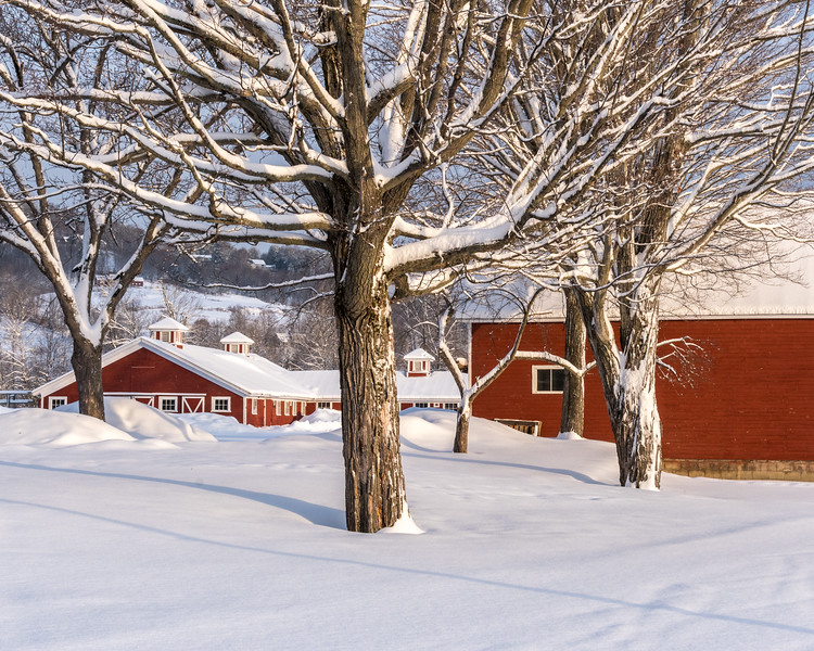Red Barns in Snow - at Quechee