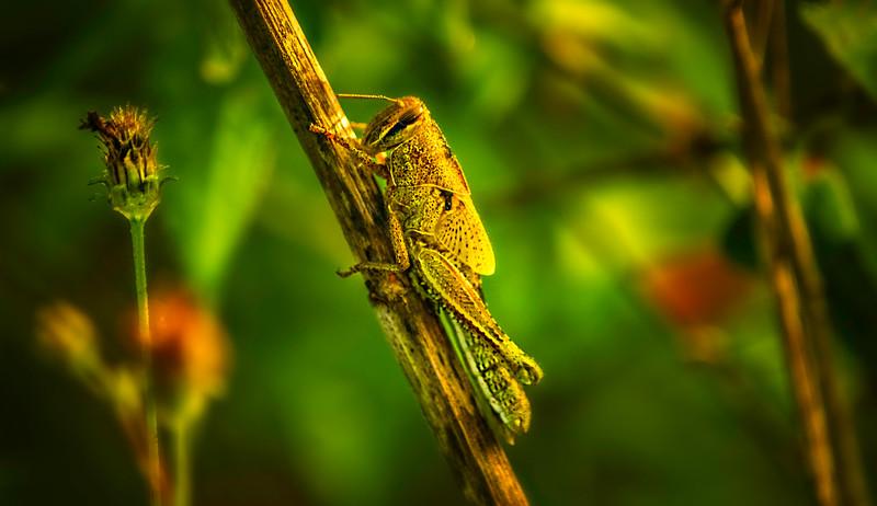 Bugs and Beetles - 130.jpg