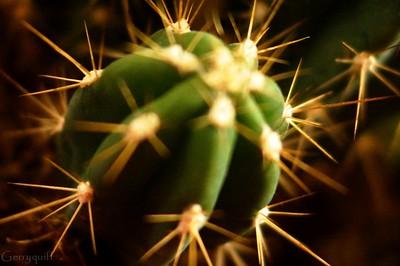 Plant life of sorts