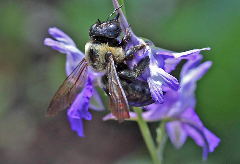 Bumble bee 24