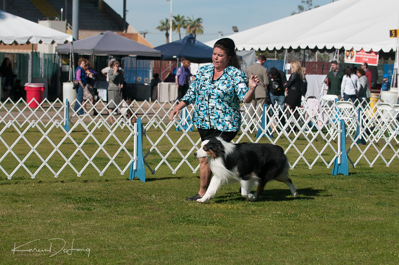 20170205_Australian Shepherds_Lost Dutchman Kennel Club-45.jpg