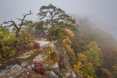 north fork mountain, october 2013