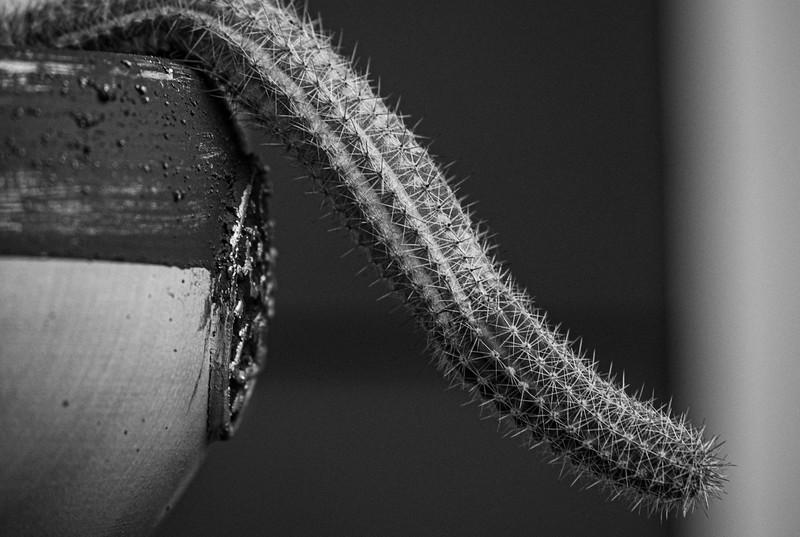 cactus 75-150-1272.jpg