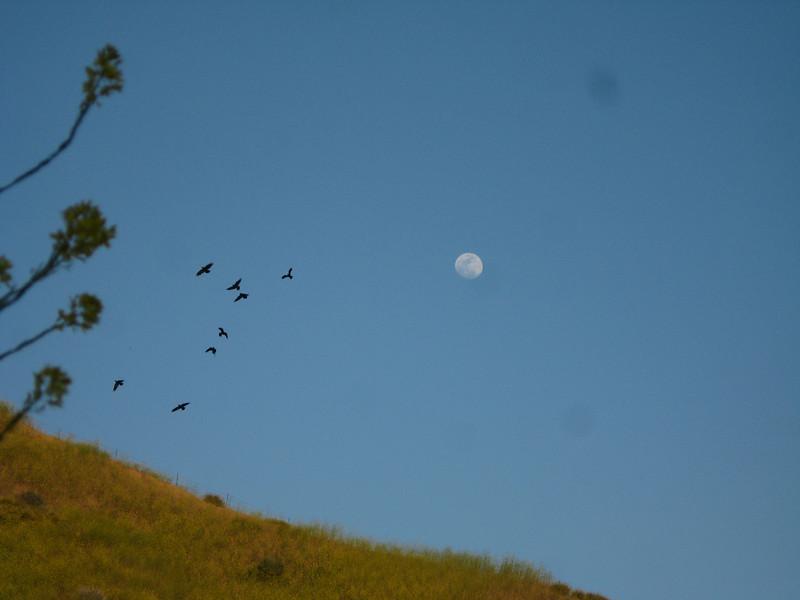 20080417019-New Millenium Trail, trailwork, Moonrise.JPG