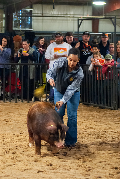 All Indian Swine Show