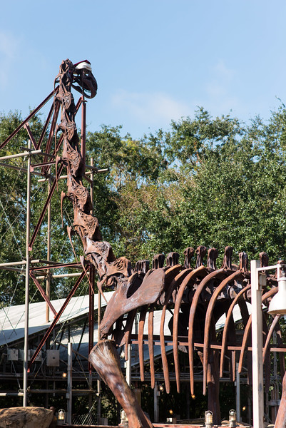 The Boneyard - Dinosaur Skeleton - Animal Kingdom Walt Disney World