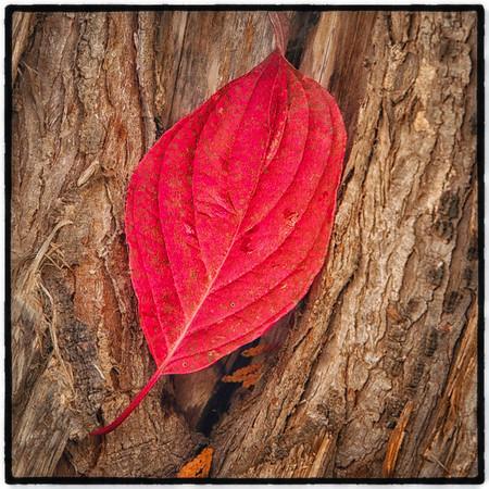Fall Leaves II 2013