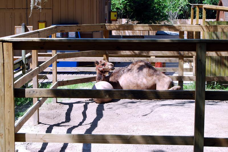 2014 Zoo in Sanford, Florida (19).JPG