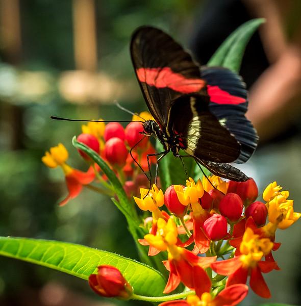A butterfly in Biosphere Potsdam
