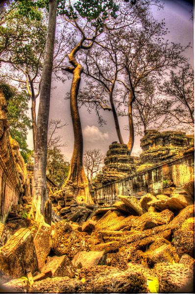 CambodiaTreesandTaPhromDSC_4892_3_4.jpg