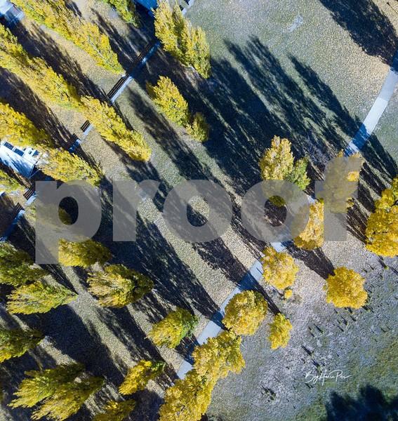 drone autumn 1.jpg
