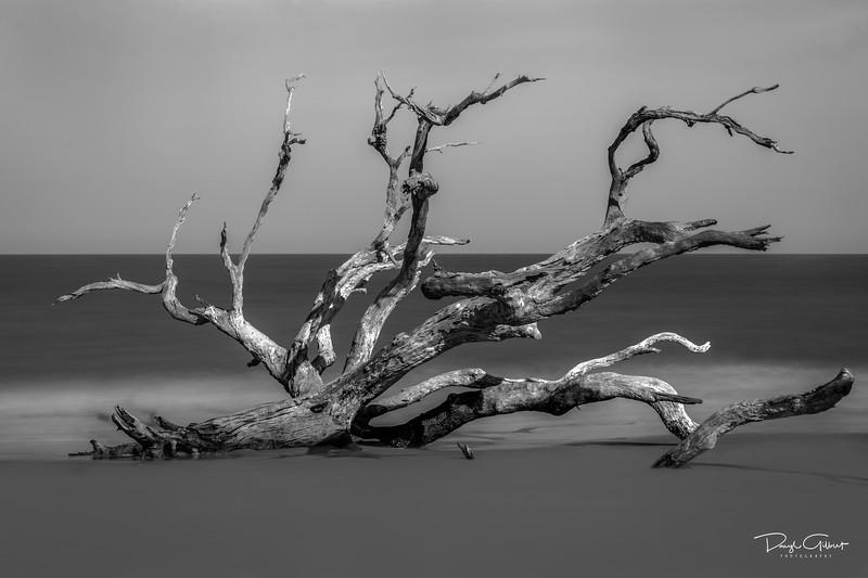 """""""Foggy Bottom Driftwood"""""""