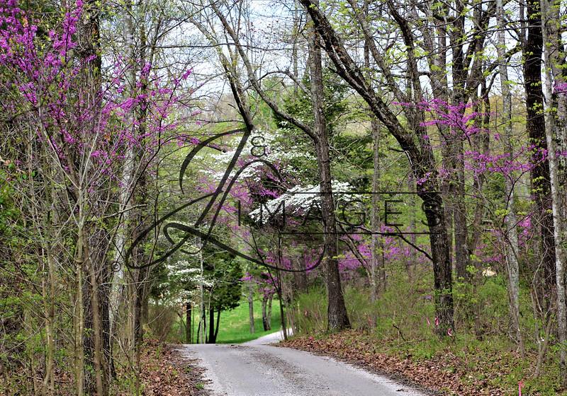 West Wind Tree Farm - April 2021