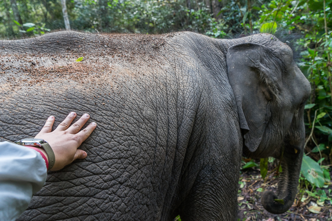 Julian Touching Journey to Freedom elephants