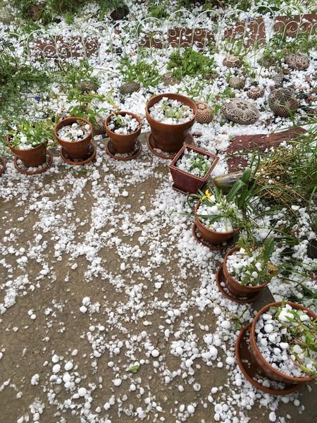 my poor garden