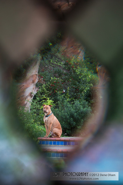 Dec 30, 2012.  I shot this through the stained glass window from the powder room.  Muddy was sitting at the perfect location.