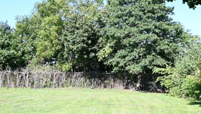 Tree Height Along Playground