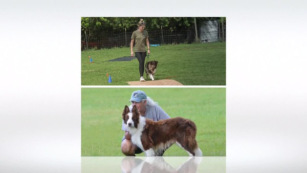 Farm Dog Slideshow