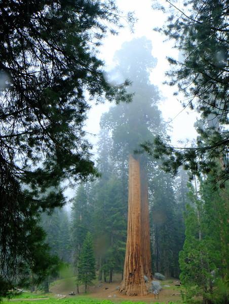 California Day 6 Sequoia 05-30-2017 123.JPG