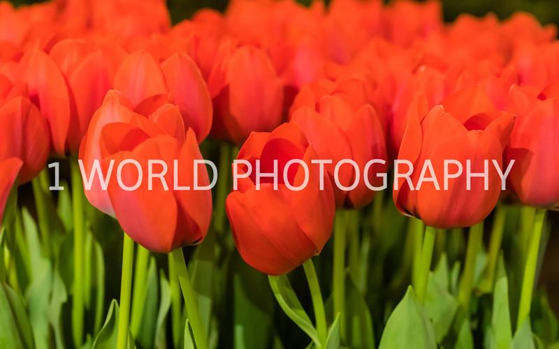 Navy Pier Chicago Flower and Garden Show-263-2-60.jpg