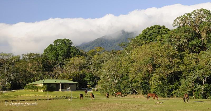 307-1646-Guanacaste-BuenaVista.jpg