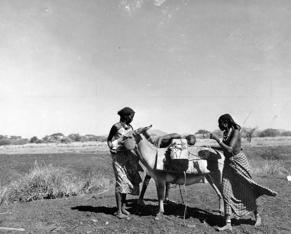 ". FEB 27 1950  Nothing short of a photograph could capture the lasting memory of the first, colorful Somali natives encountered. Here they were loading water from a buffalo wallow on the back of a Somali ""canary.\""  Credit: Denver Post"