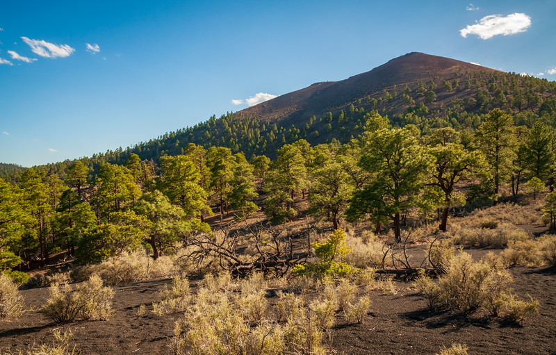 Beautiful Landscape at Sunset Crater National Monument