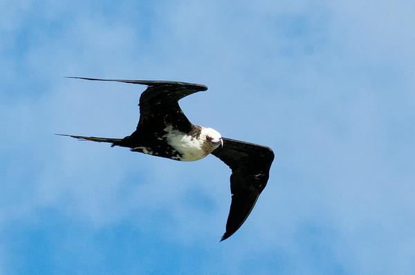 Kauai Birds