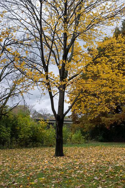 Shedding Tree