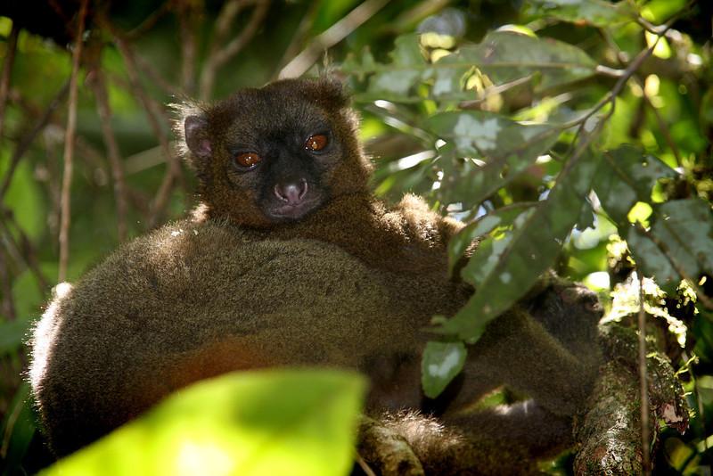 Madagascar, Fauna & Flora 3 Oda.jpg