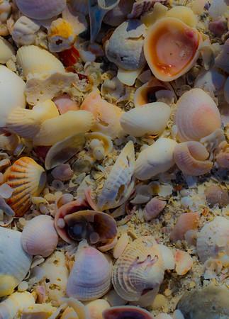 SHELL WATER BEACH SAND