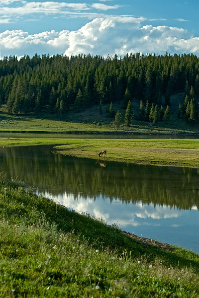 Elk Reflections