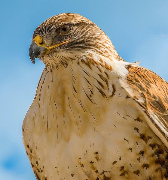 Hawks_Harris-2.jpg